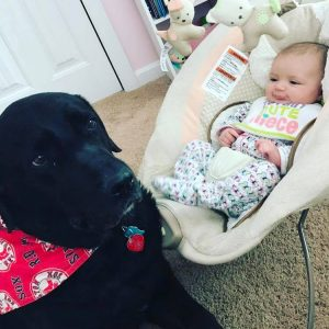 black lab and baby