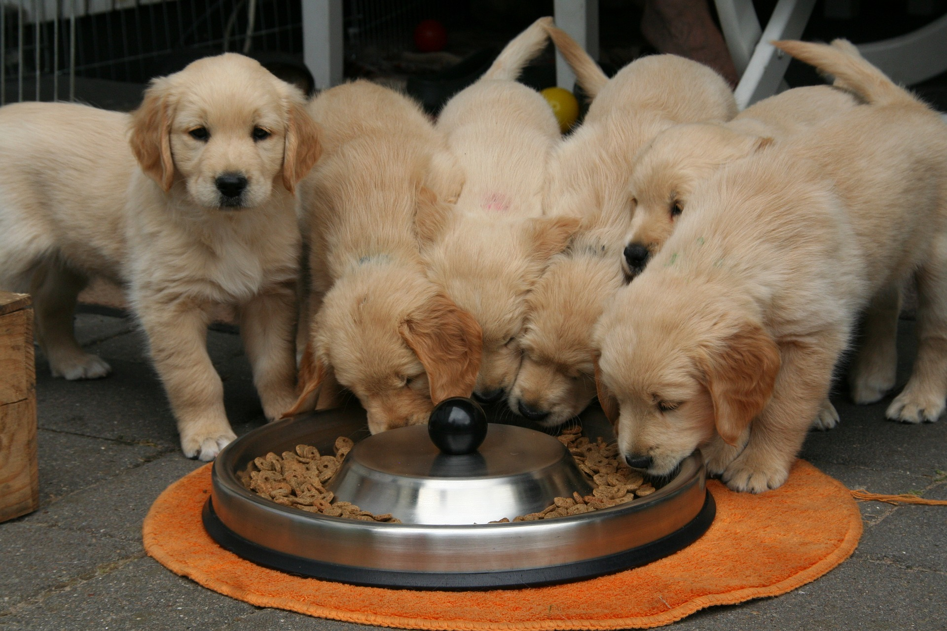 What should you feed your puppy?