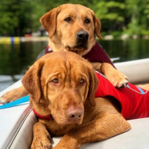 Labs boating